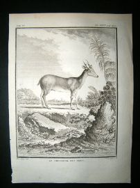Buffon: C1770 Roe Deer of India, Antique Print